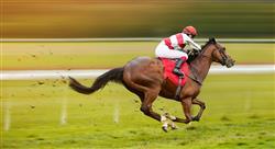 especializacion online patologías locomotoras del caballo deportivo diagnóstico tratamiento y rehabilitación