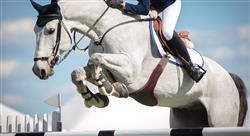 especializacion patologías locomotoras del caballo deportivo diagnóstico tratamiento y rehabilitación