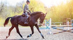 estudiar patologías locomotoras del caballo deportivo diagnóstico tratamiento y rehabilitación