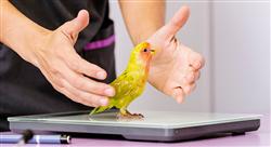 maestria online medicina y cirugía en animales exóticos