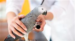posgrado medicina y cirugía en animales exóticos