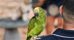 especializacion tratamientos médicos y quirúrgicos  de lagomorfos roedores aves y reptiles