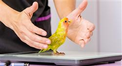estudiar tratamientos médicos y quirúrgicos  de lagomorfos roedores aves y reptiles