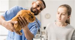 posgrado medicina y cirugía de lagomorfos y roedores