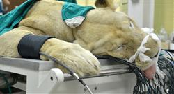 diplomado tratamientos médicos y quirúrgicos en reptiles y fauna salvaje