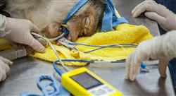 formacion tratamientos médicos y quirúrgicos en reptiles y fauna salvaje