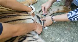 posgrado tratamientos médicos y quirúrgicos en reptiles y fauna salvaje