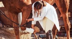 grand master traumatología veterinaria