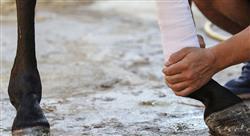 especializacion online artroscopia heridas y enfermedades de desarrollo en especies mayores rumiantes camélidos suidos y équidos