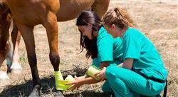 estudiar artroscopia heridas y enfermedades de desarrollo en especies mayores rumiantes camélidos suidos y équidos
