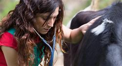 master cardiología veterinaria en especies mayores