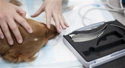master cardiología veterinaria