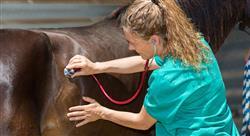 posgrado cardiología veterinaria