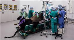magister anestesia y cirugía ortopédica en especies mayores