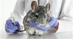 curso cardiologia veterinaria