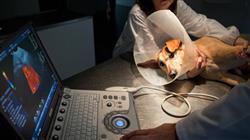 maestria cardiologia veterinaria pequenos