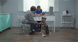 experto universitario marketing en centros veterinarios