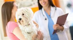 estudiar gestión de recursos humanos en centros veterinarios