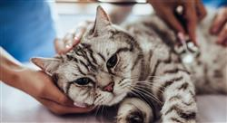 especializacion online dirección de centros veterinarios