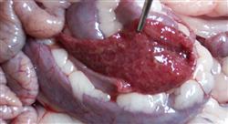 curso enfermedades digestivas en especies mayores