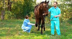 diplomado endocrinología y dermatología en especies mayores