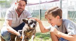 curso el sector económico de los centros sanitarios veterinarios