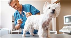 diplomado el sector económico de los centros sanitarios veterinarios