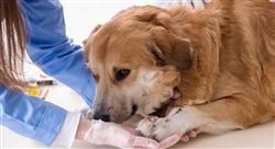 posgrado el sector económico de los centros sanitarios veterinarios