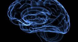 curso online efectos fisiologicos terapeuticos Tech Universidad
