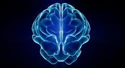 especializacion online emociones en los procesos neuroeducativos desde la acción motriz en el deporte